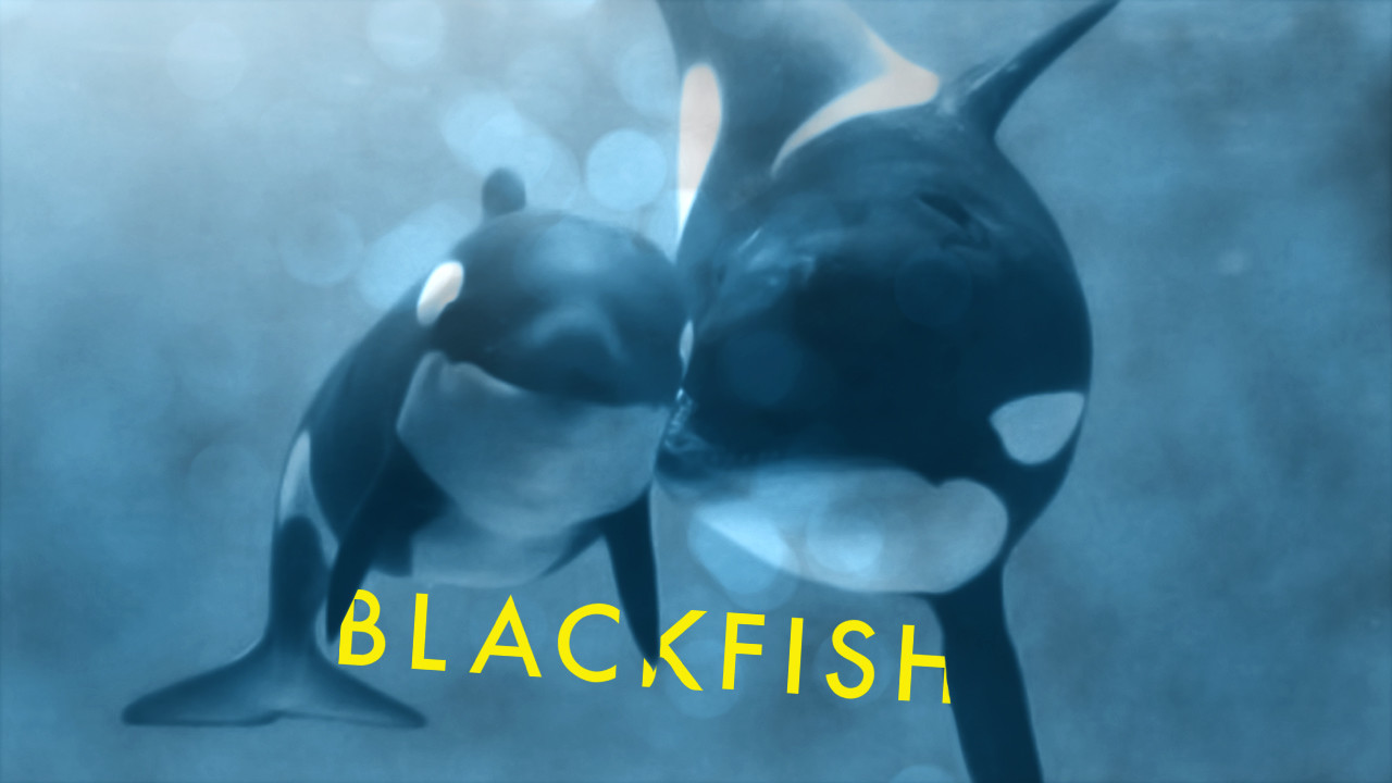 Movie poster for Blackfish showing 2 orcas a mother and a baby