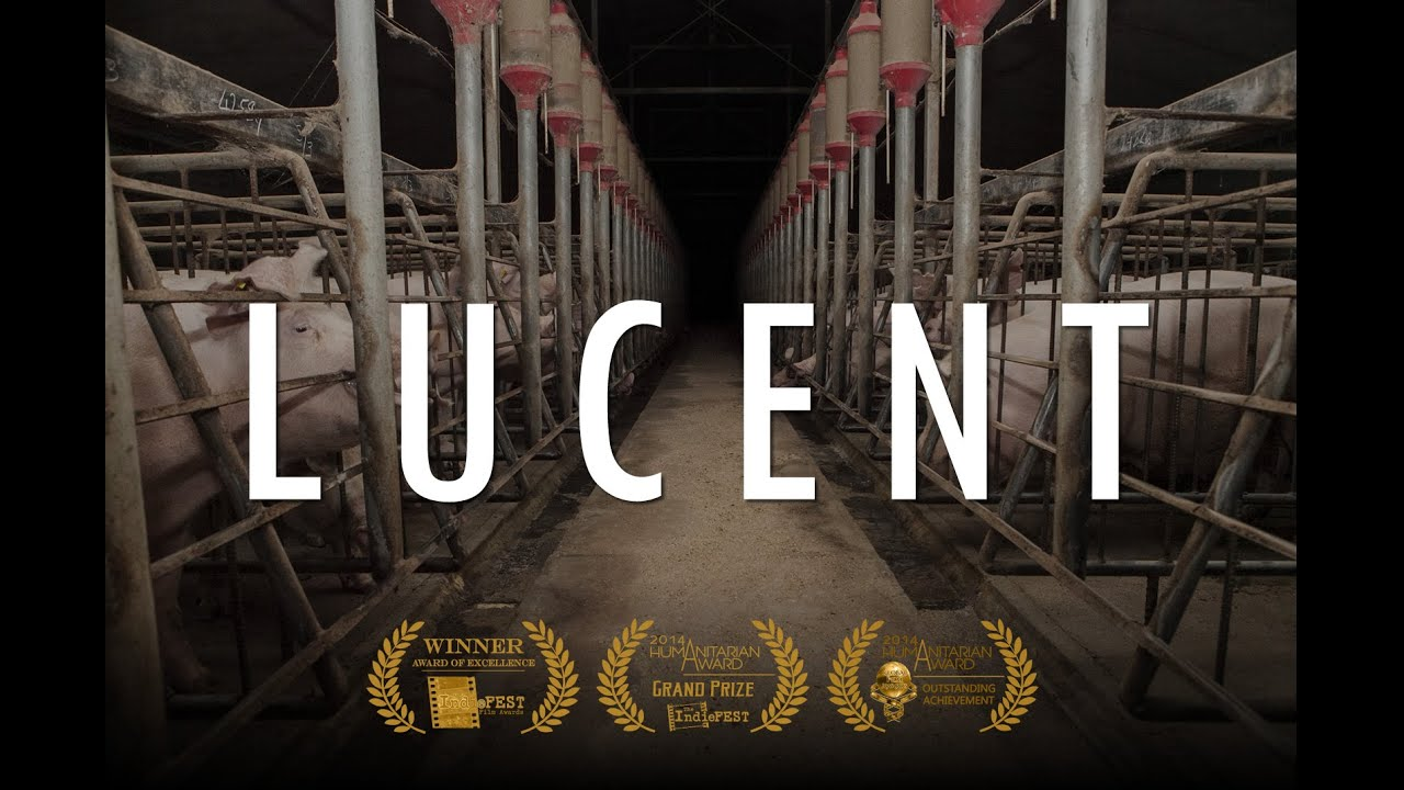 Vegan movie poster for a vegan documentary showing the insides of an industrial scale pig farm