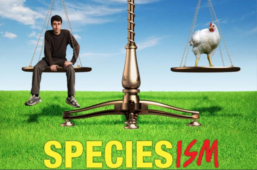 The vegan movie poster for Speciesism a vegan documentary showing a scale with a male on one side and a chicken on the other showing they are equal